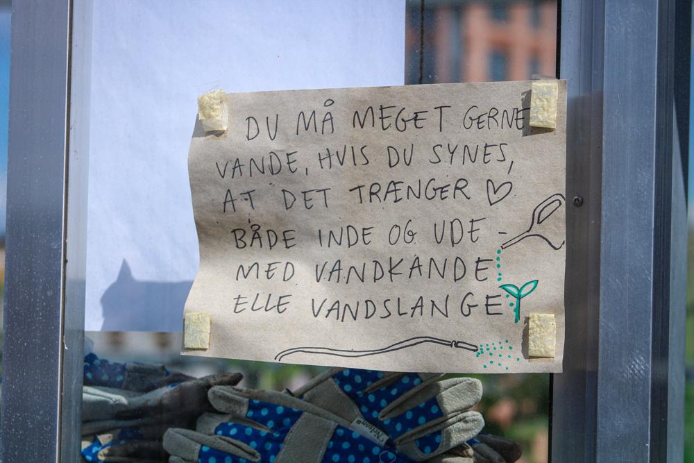 2020-06-22 Aaben Have paa Ranunkel Hus